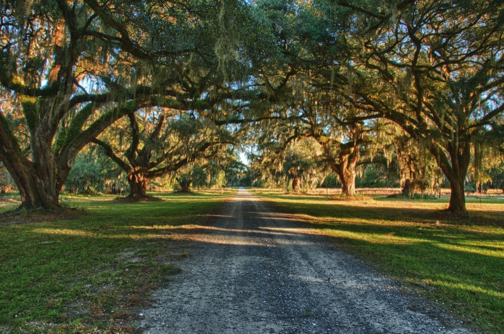 Live Oaks and Road, Edisto, SC