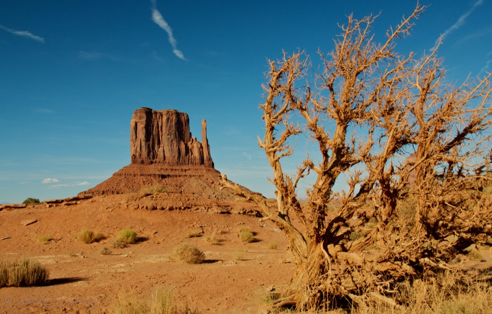 West Mitten Butte and Tree, Monument Valley