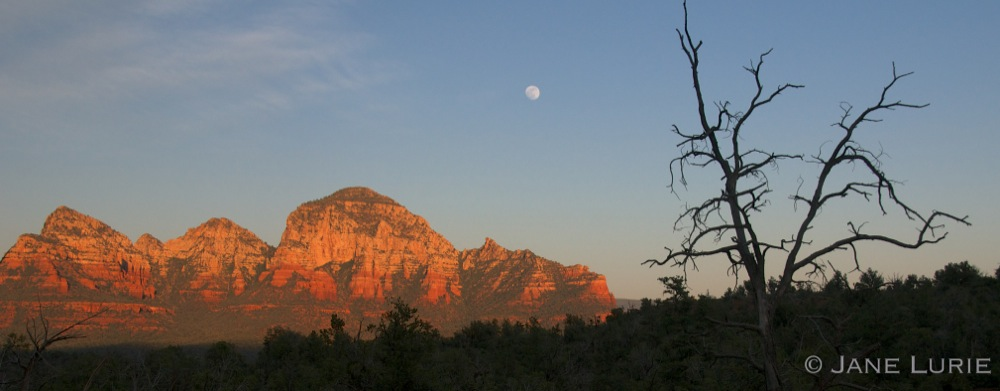 Red Rocks, Moon and Tree, Sedona