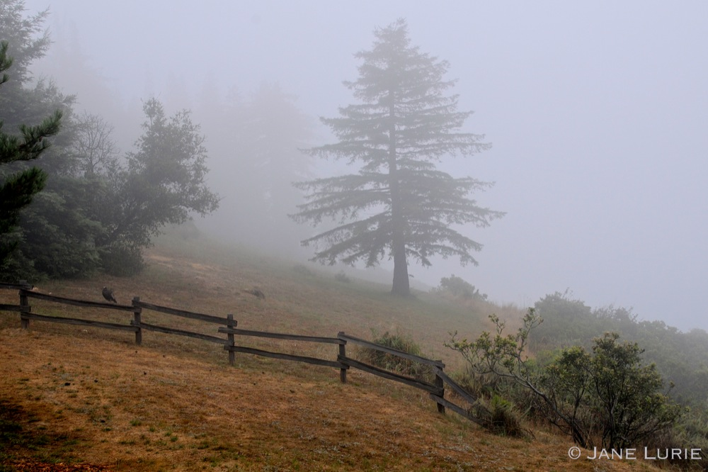 Fence and Morning Fog, Big Sur, CA