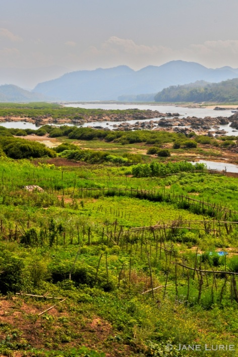 Fences and Farms, Mekong River, Laos