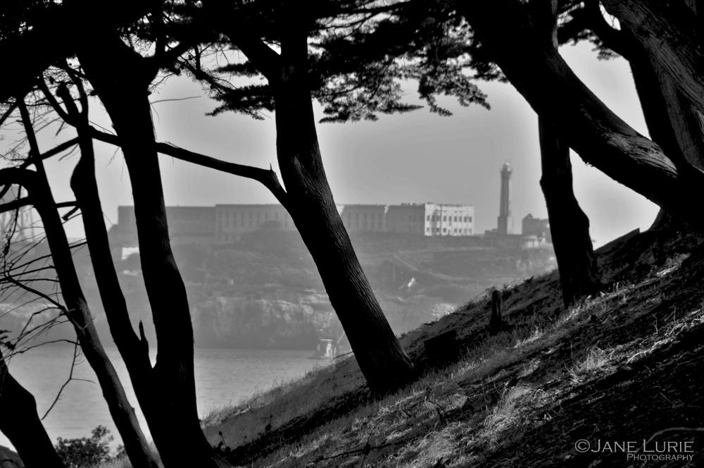 Alcatraz and Trees