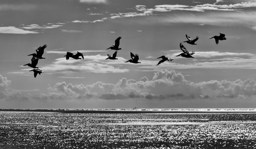 Pelicans and Clouds, Kiawah