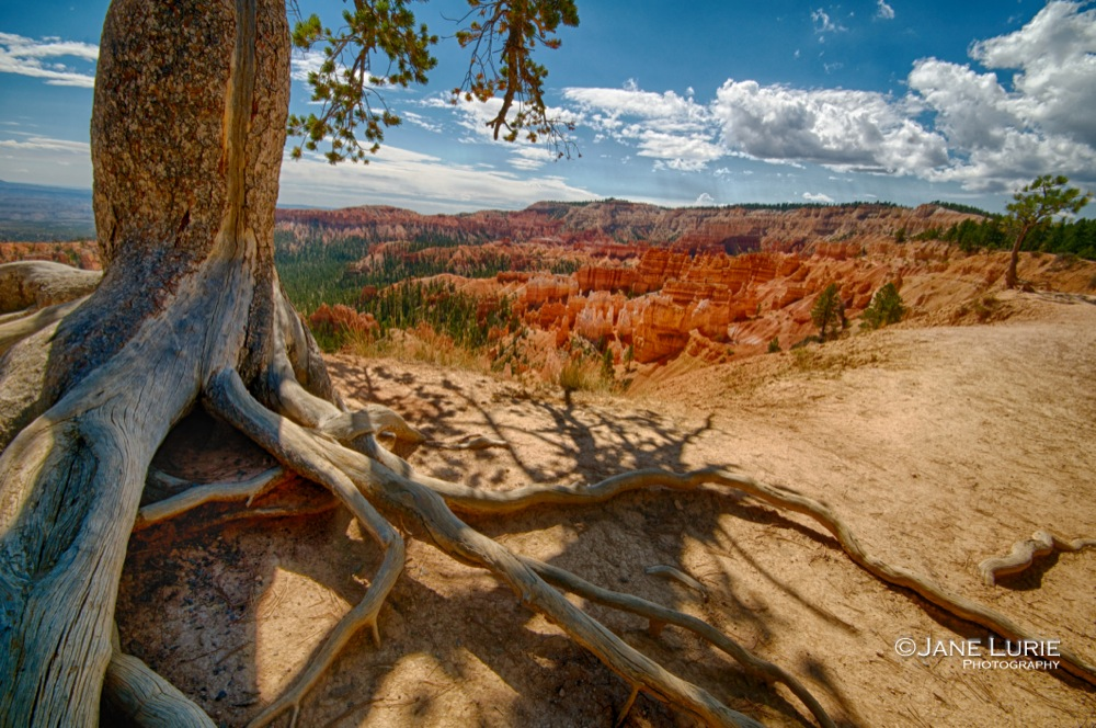 Roots and Hoodoos, Bryce Canyon, UT