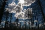 Dreaming in the Trees, Utah