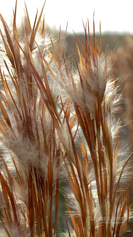 Light and Grasses