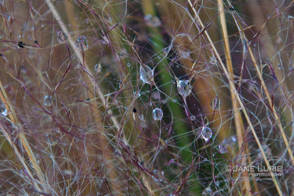 Delicate Dew and Sweetgrass