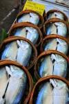 Fish at Market, Thailand
