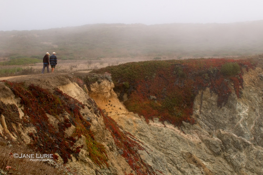 Cliff Walk, Bodega Bay, CA