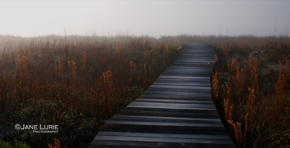 Boardwalk and Fog, Kiawah Island, SC