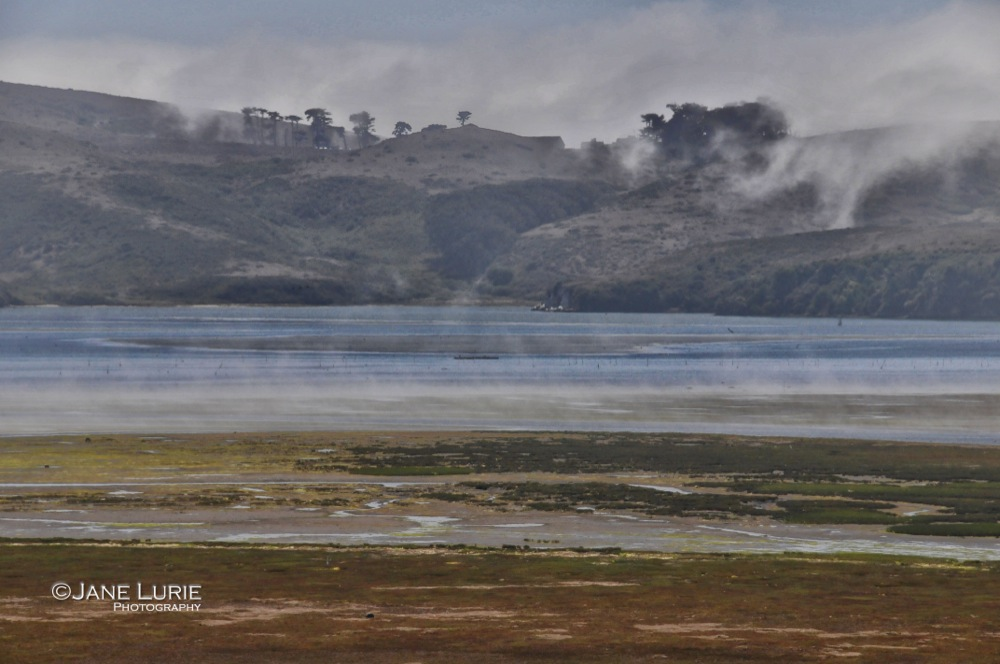 Lifting Fog, Tomales Bay, CA