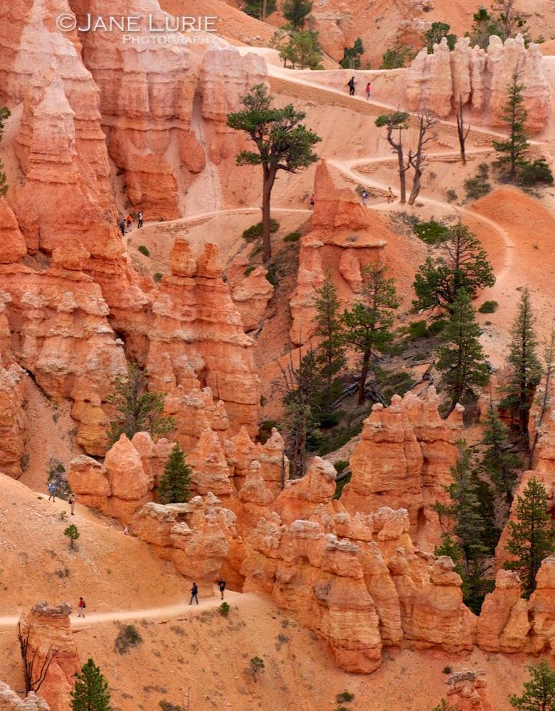 Wandering, Bryce Canyon