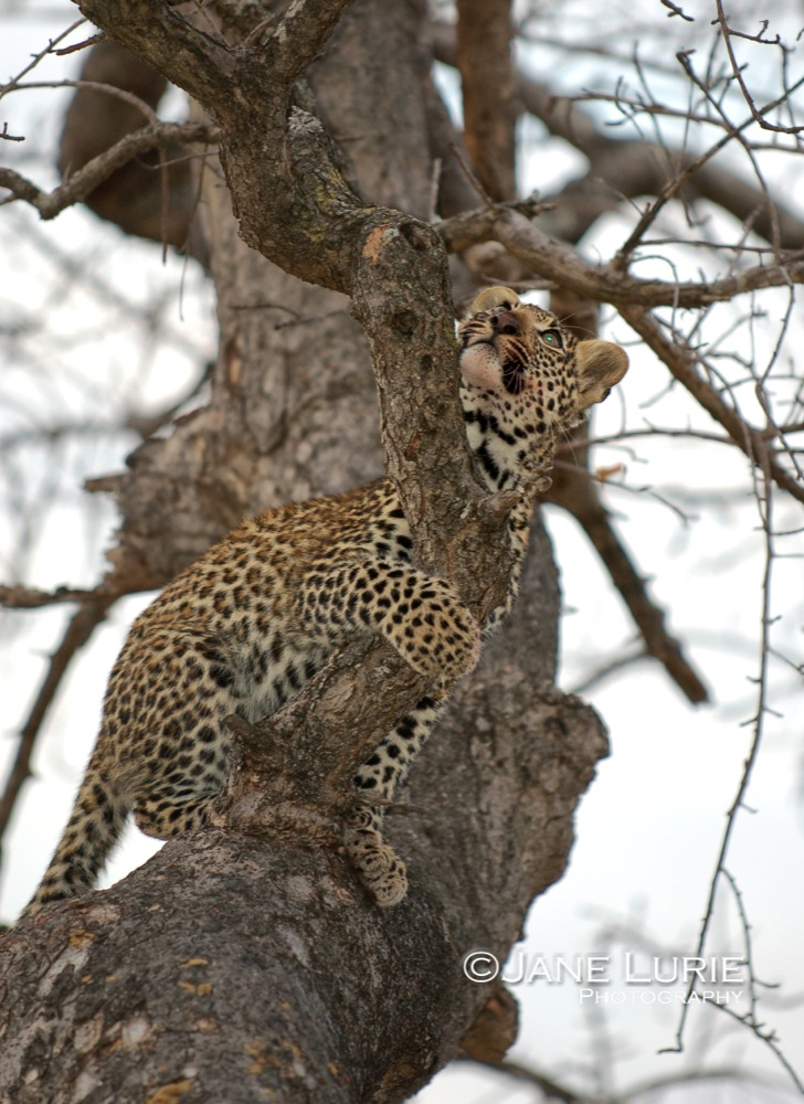 My Mother's Up There,  Botswana