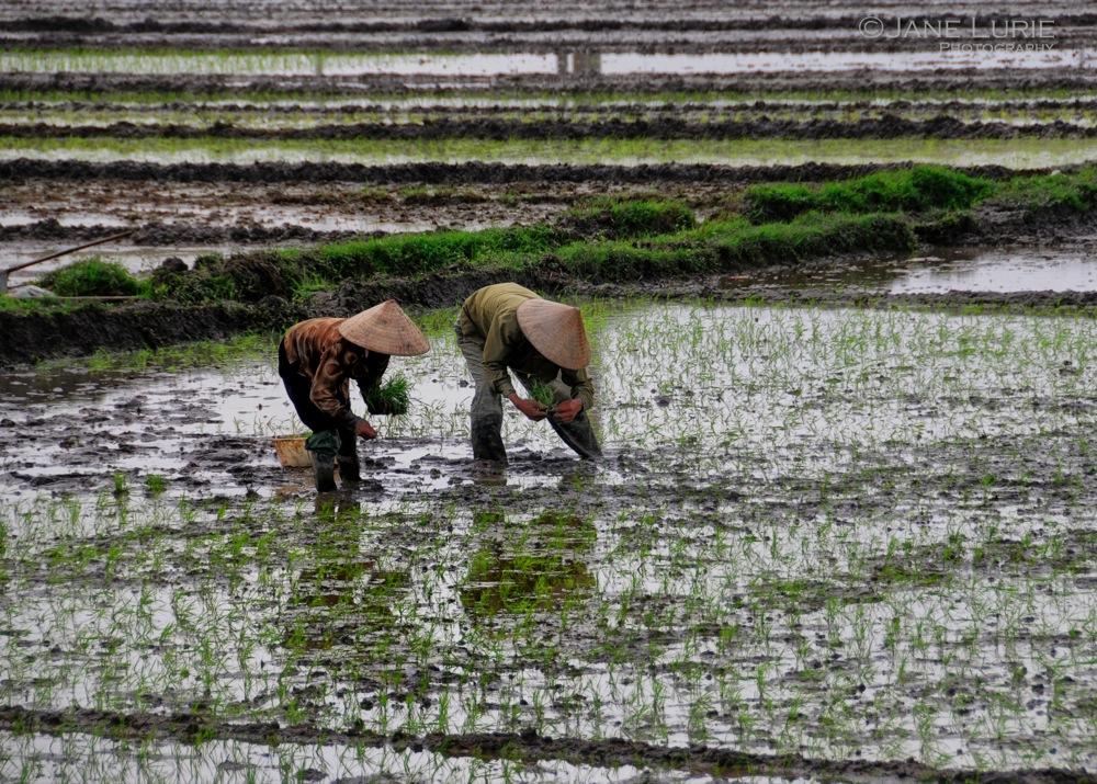 Planting Partners, Vietnam