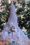 My Termite Mound