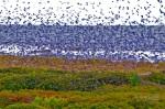 Fall Migration, Kiawah Island, SC