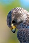 Falcon, South Carolina
