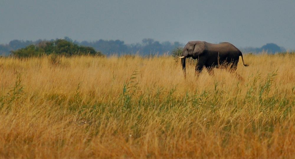 Heading Home, Botswana