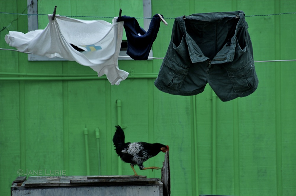 Laundry and Rooster, Bahamas