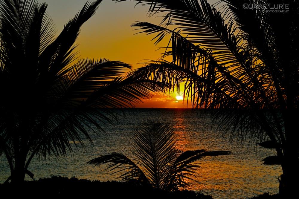 Dawn and Palms, Bahamas