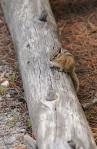Got Nuts? Yellowstone