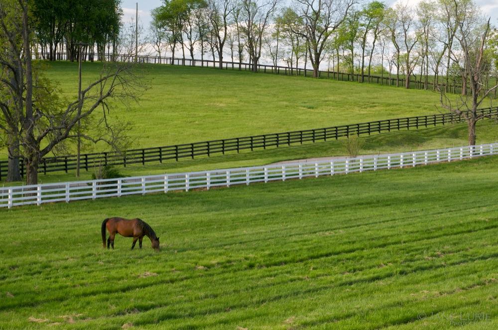 A Horse and His Fences, Lexington