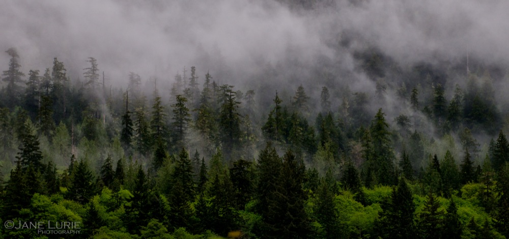 Lifting Fog, Olympic National Forest