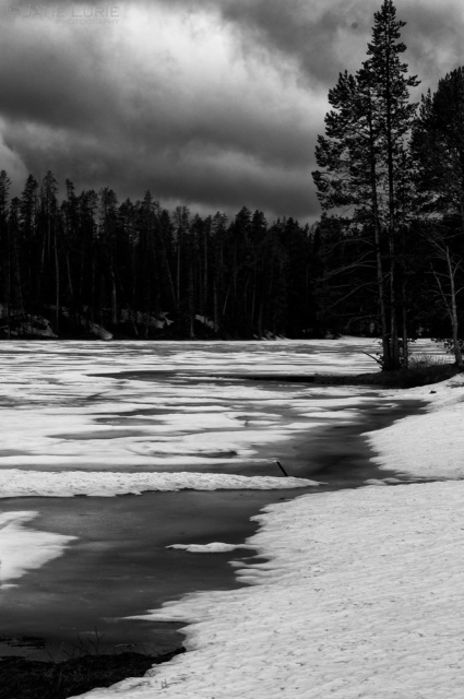 Ice Break and Pine, Yellowstone