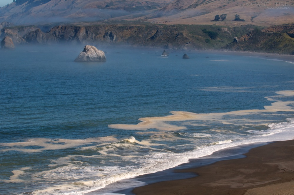 Rock and Surf, Sonoma Coast