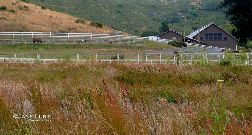 Barns and Paddock, Marin
