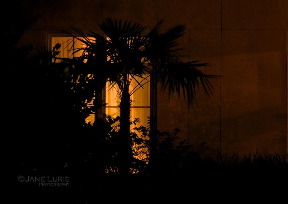 Palmetto Evening, South Carolina