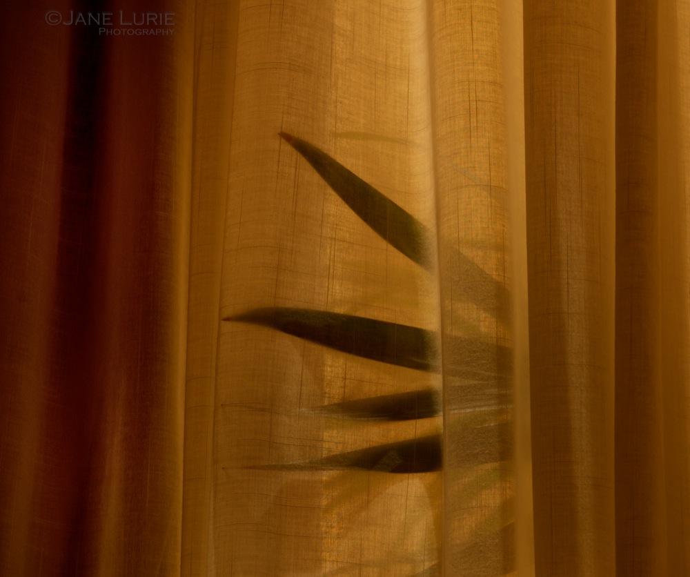 Fronds and Curtain, South Carolina