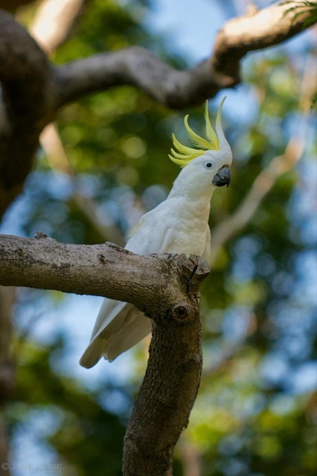 Good Morning to You, Mr. Cockatoo, Botanic Garden