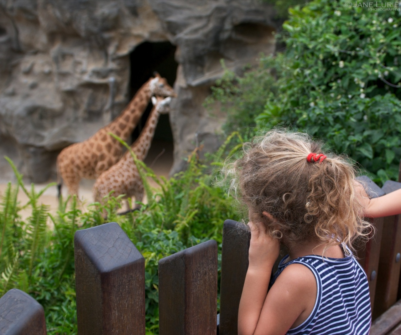 Imagination Running Wild, Taronga Zoo