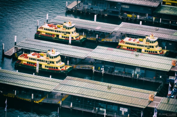 Three Ferries Waiting, Sydney