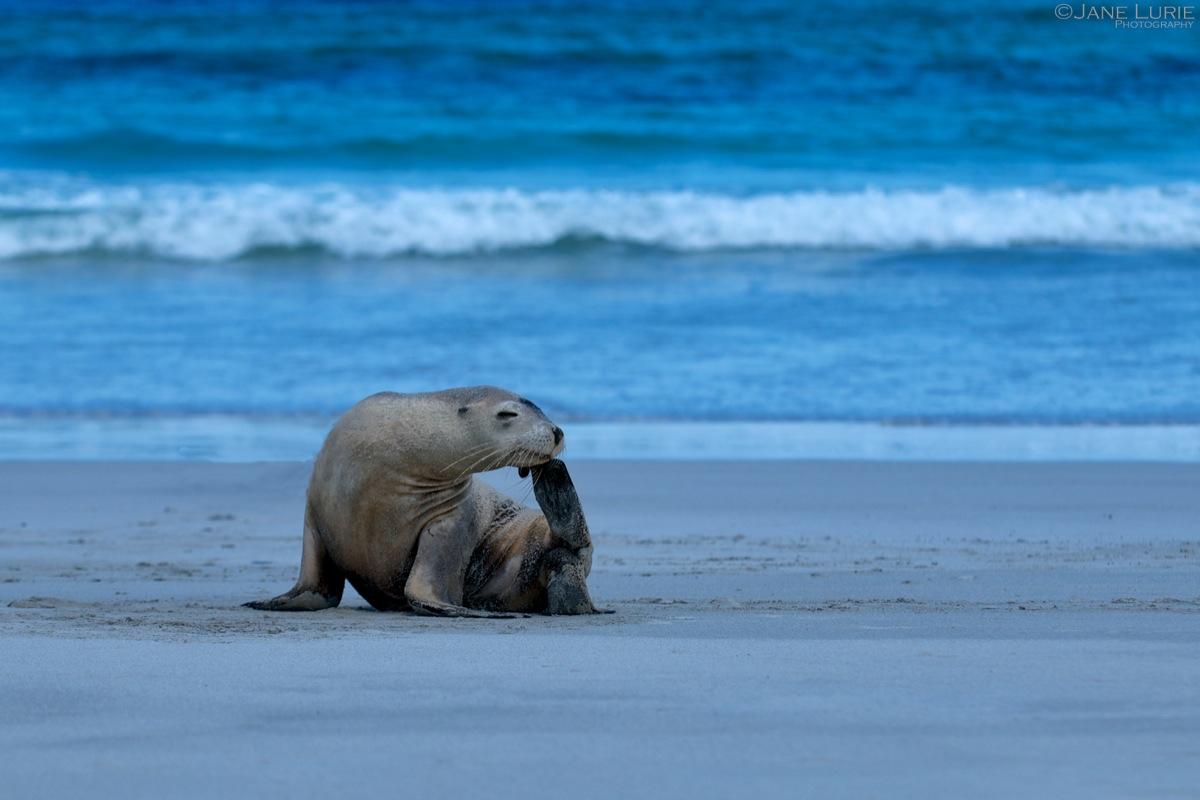 Just Thinkin', Kangaroo Island