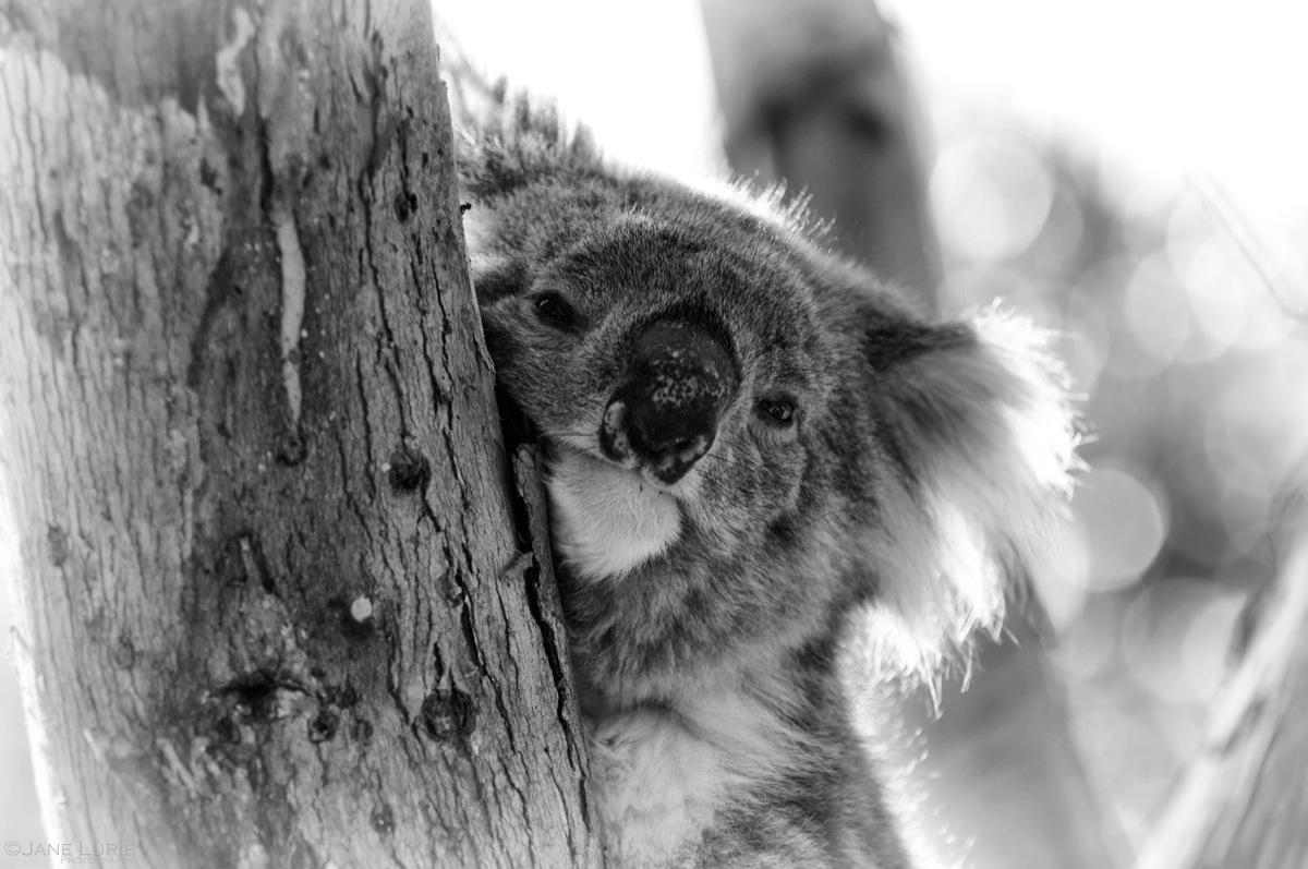 G'Day, Kangaroo Island