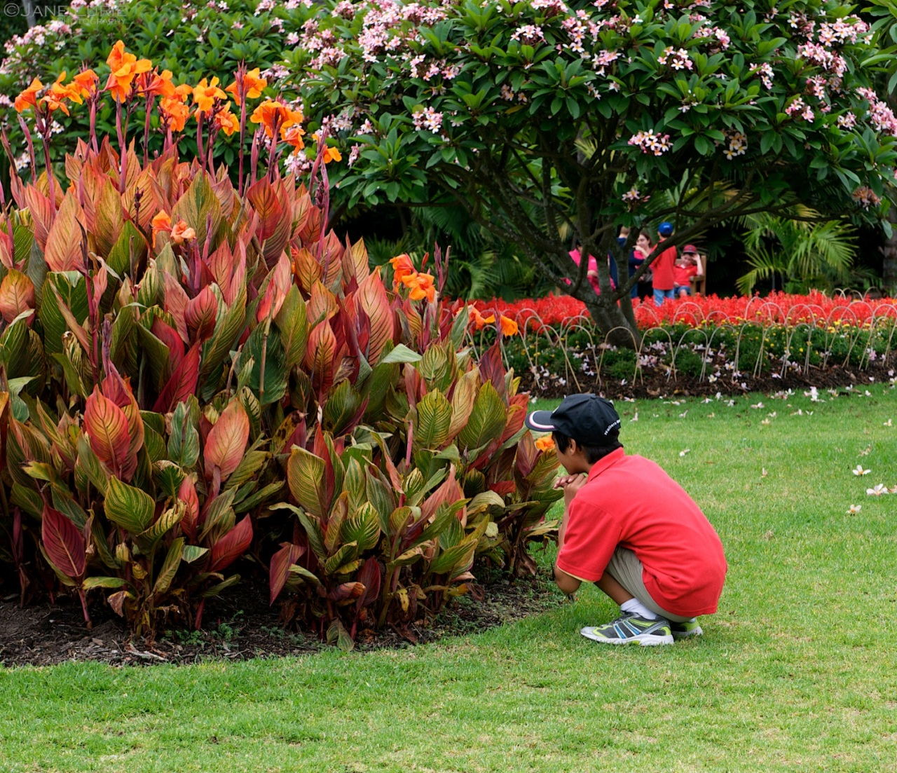 Hide and Seek, Botanic Garden