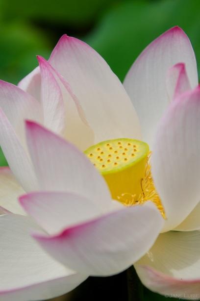 Blooming, Botanic Garden
