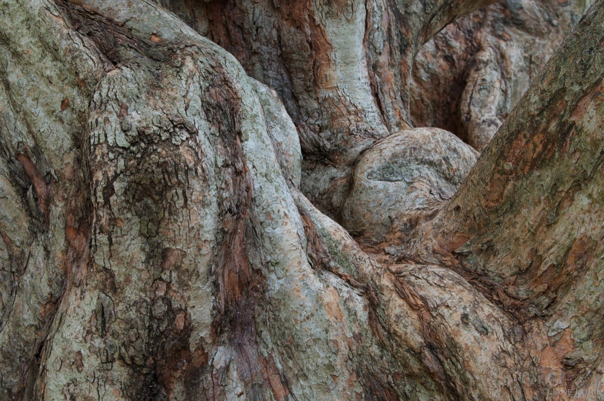 Trunk Sinew, Botanic Gardens