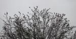 Birds, Trees, Kiawah Island