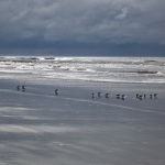 Landscape Photography, South Carolina, Kiawah Island, Birds, Ocean, Beach, Nature