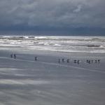 Landscape Photography, South Carolina, Kiawah Island, Birds, Ocean, Beach, Nature