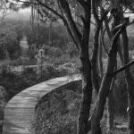 Trees, Beach, Boardwalk, Black and White