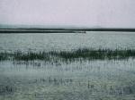 Kayakers, Marsh, Kiawah Island, South Carolina