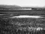 Landscape Photography, Marsh, Nature, Lowcountry, South Carolina