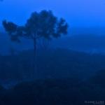 Landscape Photography, Fog, Dunes, Pine, Beach