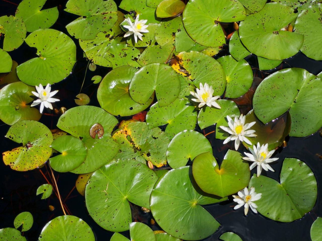 Okefenokee, Swamp, Landscape, Nature,