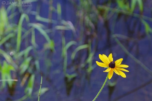 Nature, Flower, Landscape, Close-Up