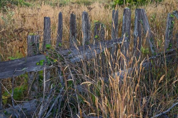 Sea Ranch, Fence, Landscape, California
